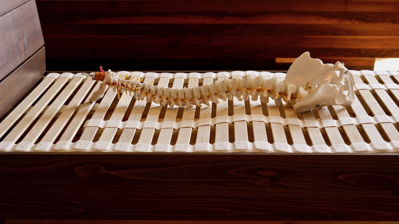ナチュールフレックスウッドスプリングと脊柱模型