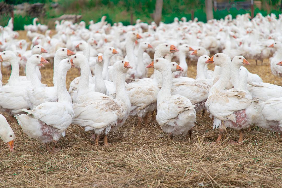 ポーランド|マザーグース農場