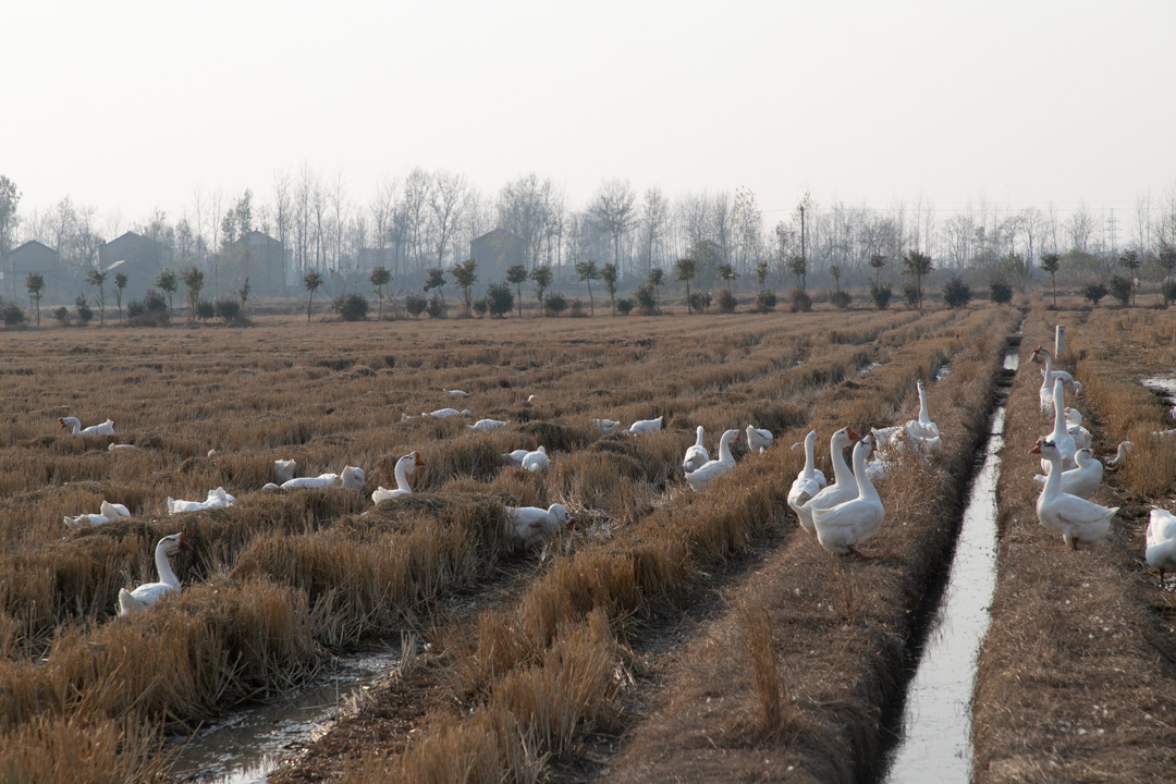 中国マザーグース農場